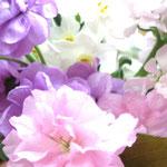 ❀ 八重桜 ストック 水仙