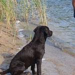 Josie am Wasser