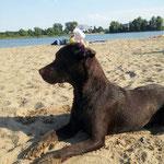Strandhund Josie..