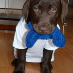 Germany`s next DOG Modell