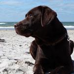 Josie liebt den Strand und das Wasser...gelungener Urlaub!!!