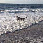 Spass in den Wellen