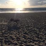 Josie hat viel Spaß am Strand
