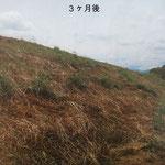 長野県松代市 河川改修工事 ビオプラッグ T-100  施工完了後3ヶ月後