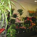 Fleurs de léa : stand fleurs coupées