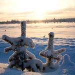 Finnish Taïga in Pyhä-Luosto Naitonal Park (Finland)