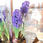 この飾られたお花、後でHPを拝見すると、鉢植えセミナーがあったようです。