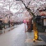 4月下旬の満開時の通り。110年前、日露戦争の戦勝を記念した植樹です。寿命60年のソメイヨシノが風格を保ちつつ咲いてるのは、村人の努力の賜物ですね