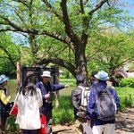 称名寺 浄土庭園