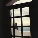 サントリーニ・ポートフィラH・窓越の猫