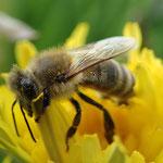 Honig aus eigener Imkerei