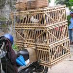 Kommen oder wollen die zum Vogelmarkt ?