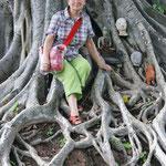 An einem großen schattenspendenden Baum