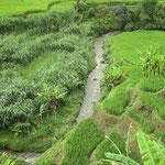 Reisfelder unterwegs