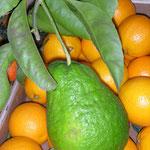 Es gibt auch echte Limonen