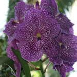 Die Orchidee wächst genau vor unserer Terrasse