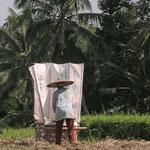 Frau beim Reisausklopfen