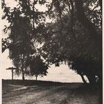 Der Weg nach Undeloh ca. Ende der 50er Jahre