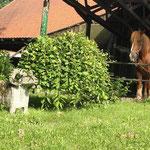 ... und der Pferde zurück!