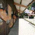 Die Aussenboxen auf dem Garbers Hof mit dem schönem Blick für die Pferde.