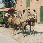 Der Garbers-Hof in den 80er Jahren, Kutschfahrten