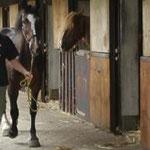 Ihr Pferd ist bei uns bestens aufgehoben...