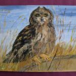 Nr 51, Owl, oil, 30 * 40 cm