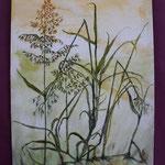 Nr 53, Gräser, Aquarell, 24 * 32 cm