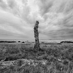 September 2015 _Hoge de Veluwe_