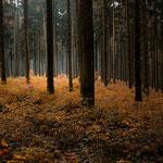 Teutoburger Wald 2015