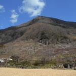 今年も幕山梅林祭りが開催されました。