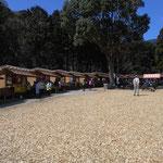 広場では湘南ゴールド(小ぶりの蜜柑)や干物を買ったり、うどんを食べたりできます。