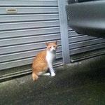 しょぼ猫はカメラに慣れてきた感じでしたが、2017年10月ころから消息不明です...