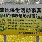 なぜ菜の花が沢山植えられてるのか? 耕作放棄地対策なんですね。蜜柑農家の人も高齢化で、収穫できなくなったので、蜜柑の問屋さんが代わりに収穫してあげるというような話を聞きました。