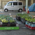 野菜の苗も売っています。当地の庭はお花畑より野菜畑が多いです。