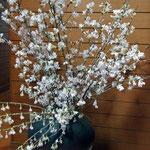 湯河原で束で買った彼岸桜を備前花瓶に入れました。これもきれい〜!春はいいですね〜