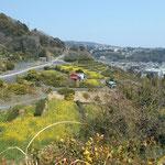 車道から眺めています。画面の右上方は真鶴半島の方角です。