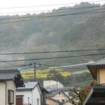 車道から見える山の中腹ですが、春になると黄色の帯が出現します。 「菜の花テラス」と呼ぶそうです。