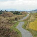 新原(しんばる) 奴山(ぬやま)古墳群(5.C〜6C.)です。古墳は平らな土地に作るものなんですね。