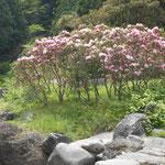 幕山公園の手前、新崎川の川中島です。