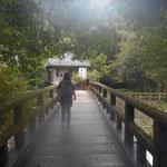 バスで湯ケ野温泉に出て、歩いて福田屋に向かいます。