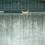 毎朝、湯河原駅に行くまでに会うのはネコです。好きではないので、向こうも警戒します。画面には2匹います。