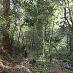 渓流沿いに、さくさく降りて行きます。展望はありませんが、檜の枝が積もった道もあります。