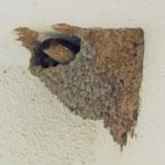 7月20日 定員は2羽の小さなおうちです!