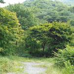 2017年夏 幕山は低山なので草が茂り、ベンチも見えません。