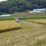 稲刈りの最中です。ここは枝豆の産地だそうで、お土産にしました。