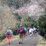 In March 2016, I visited the plum-grove in Makuyama mountain from the JR station by bus.