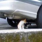白黒ブチの兄弟猫です。