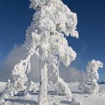 Winter auf der Hornisgrinde im Schwarzwald