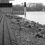 Tiefstand im Rheinhafen